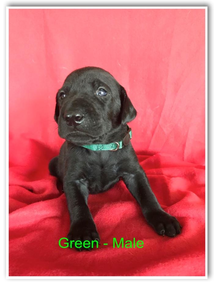 Green Male