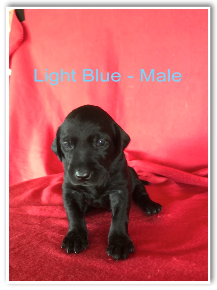 Light Blue Male