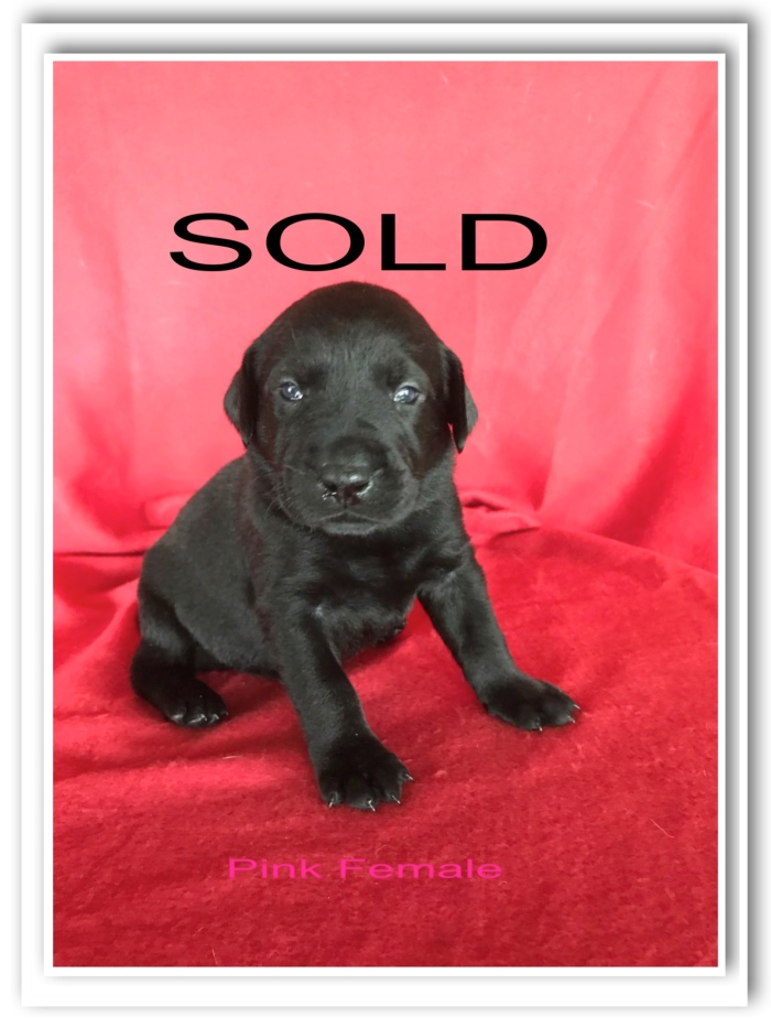 PINK FEMALE - SOLD
