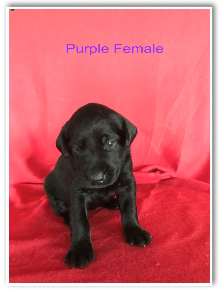 Purple Female