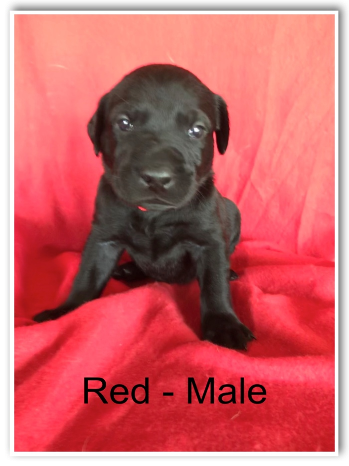 Red - Male