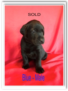 BLUE-MALE-SOLD