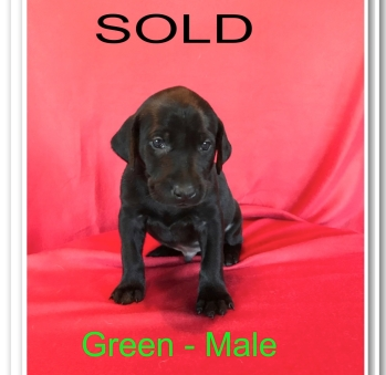 GREEN MALE - SOLD