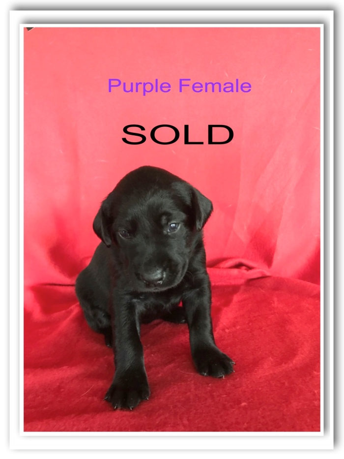 PURPLE FEMALE SOLD