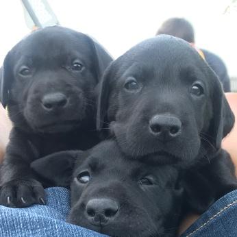 Three Sweeties 8-4-18