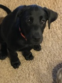 Bailey 3 months