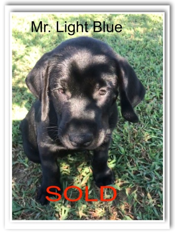 LT. BLUE SOLD 8-31