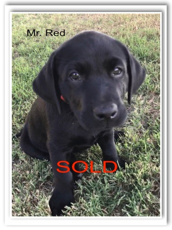 MR RED SOLD