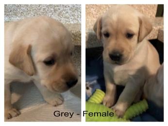 !Grey -Female 2-27-19