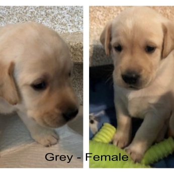 !Grey -Female 2-27-19