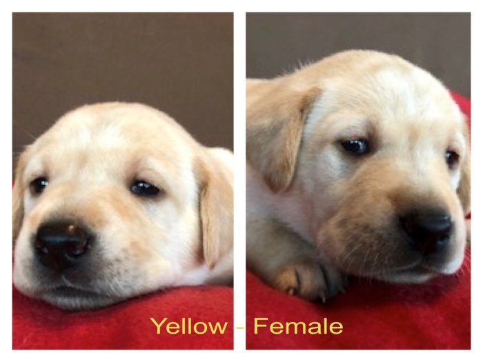 !Yellow-Female 2-27-19