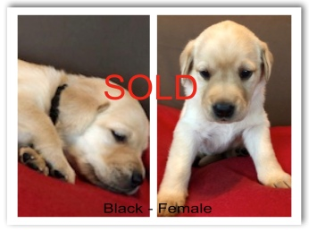 !BLACK FEMALE SOLD -2