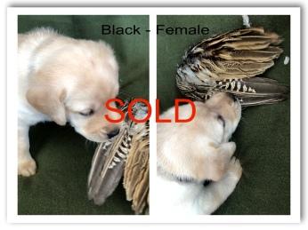 !BLACK FEMALE SOLD