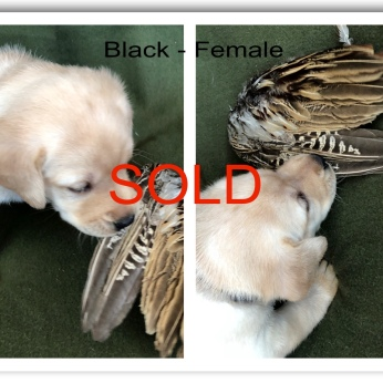 !BLACK FEMALE SOLD