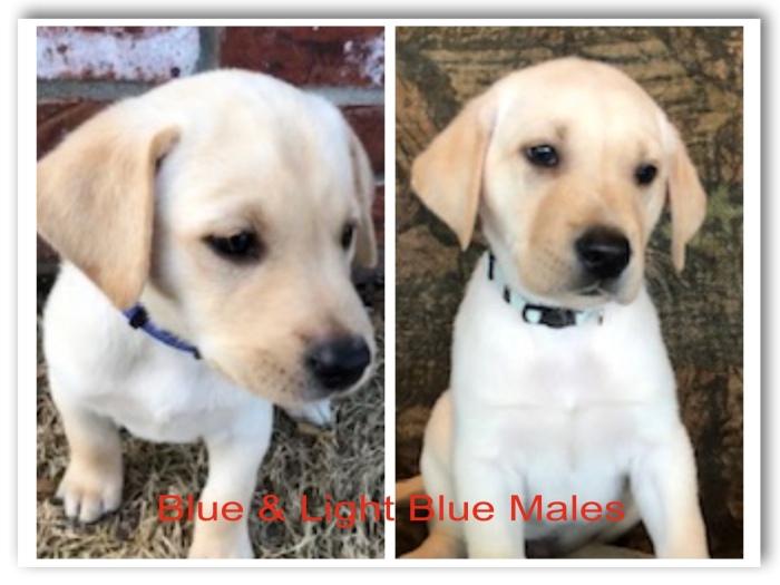 !Blue & Lt Blue Males Title 3-20-19