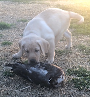 Dog-Duck 3-28-19