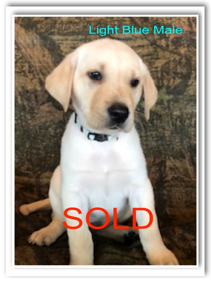 SOLD - LT BLUE 4-5-19
