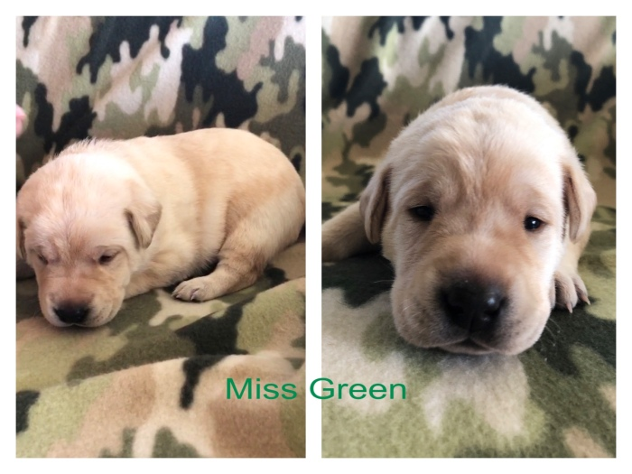 Miss Green Title 10-17-19