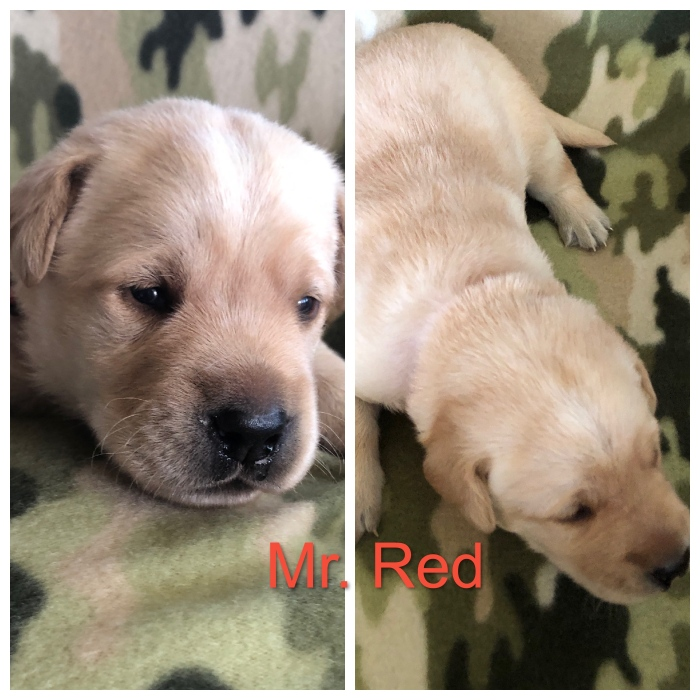 Mr. Red Title 10-17-19